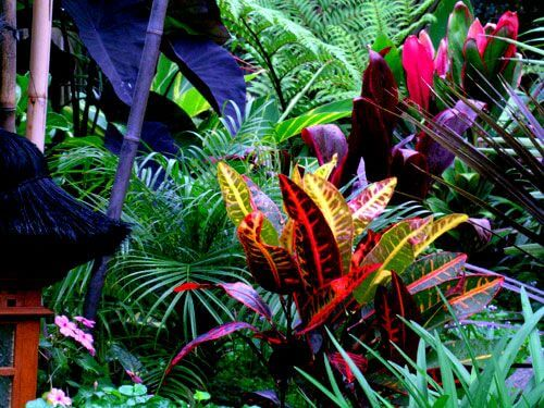 As melhores plantas tropicais para a decoração de interiores