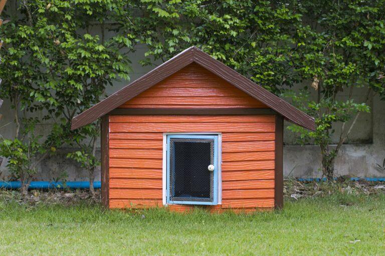 Você deve saber que tamanho a casinha deve ter