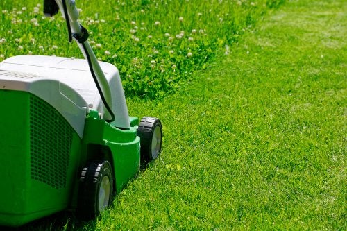 manutenção da grama