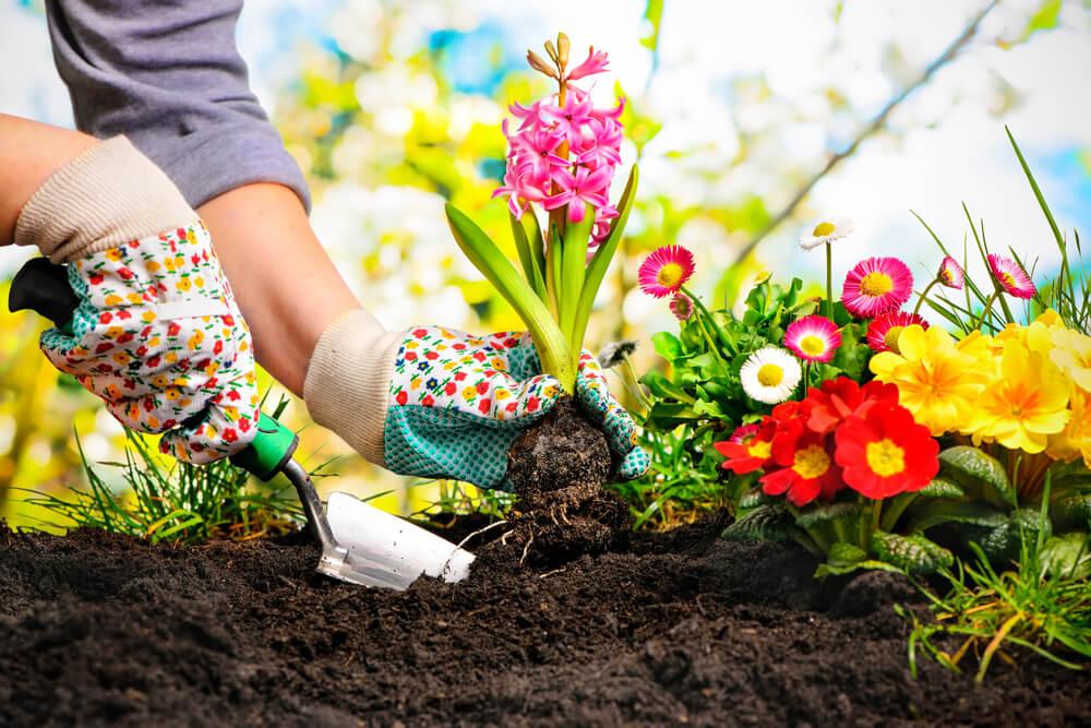 8 melhores plantas para decorar os arredores da casa
