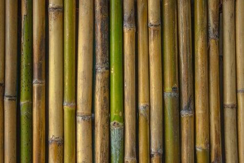 Decorar o banheiro com bambu: algumas ideias originais