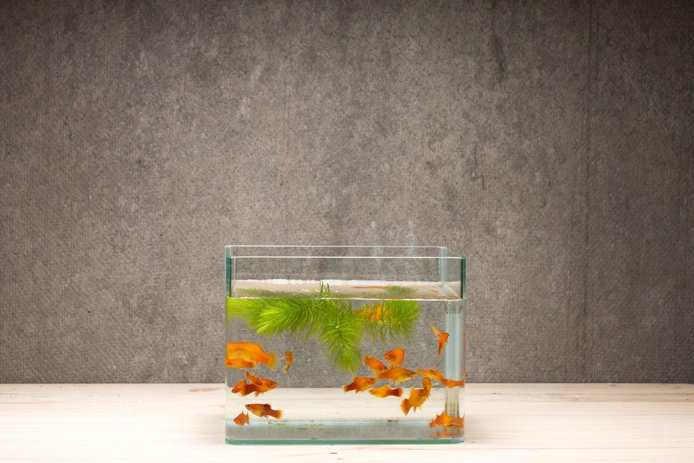 decorar aquários