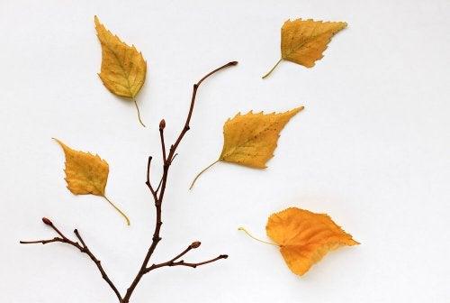 2 maneiras de criar quadros com folhas secas