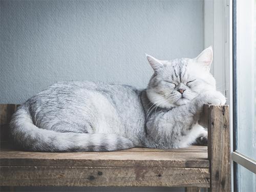 Reutilizar móveis velhos para os animais de estimação
