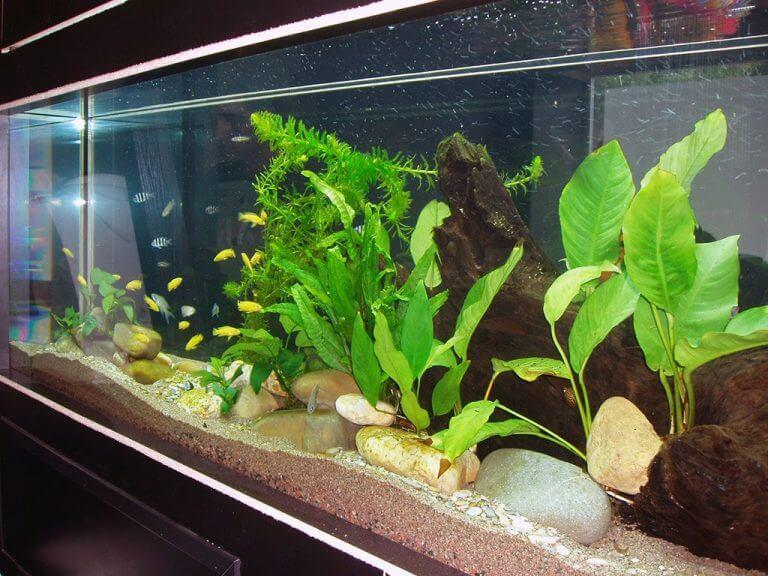 Aquários com plantas naturais