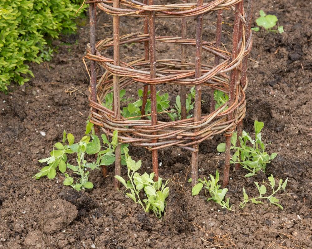 Estrutura de ferro para guiar plantas trepadeiras