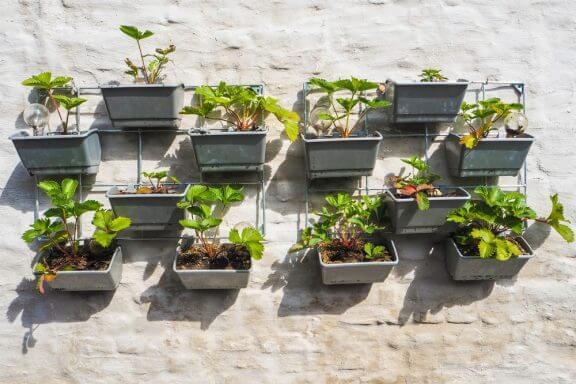 Monte uma pequena horta no terraço da sua casa