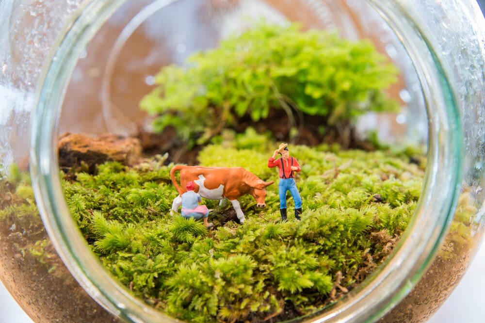 5 jardins em miniatura que você vai adorar