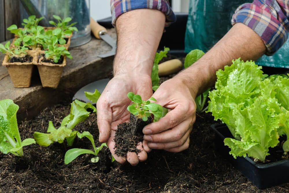 Construa uma horta no seu jardim