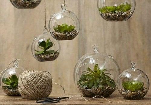 Vasos de plantas transparentes para decorar sem gastar