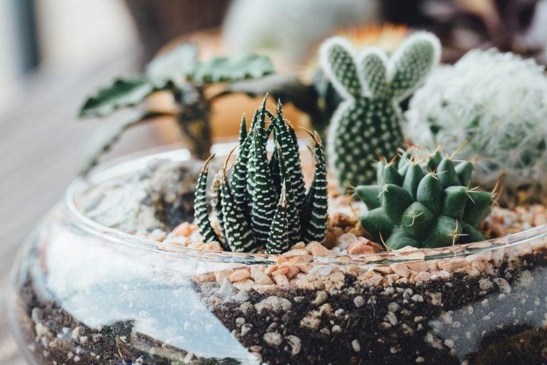 Escolher o tipo de planta para o seu jardim vertical