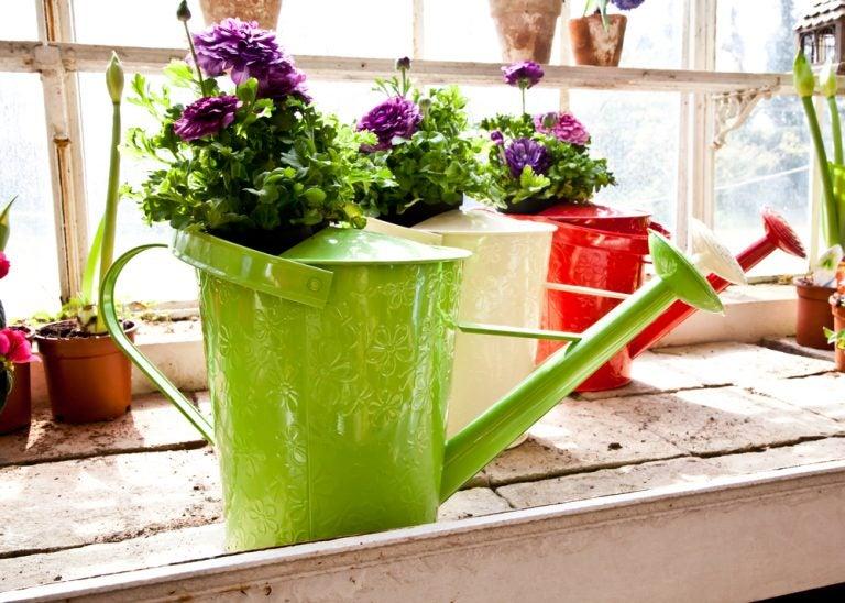 Um regador como um elemento para decorar com flores