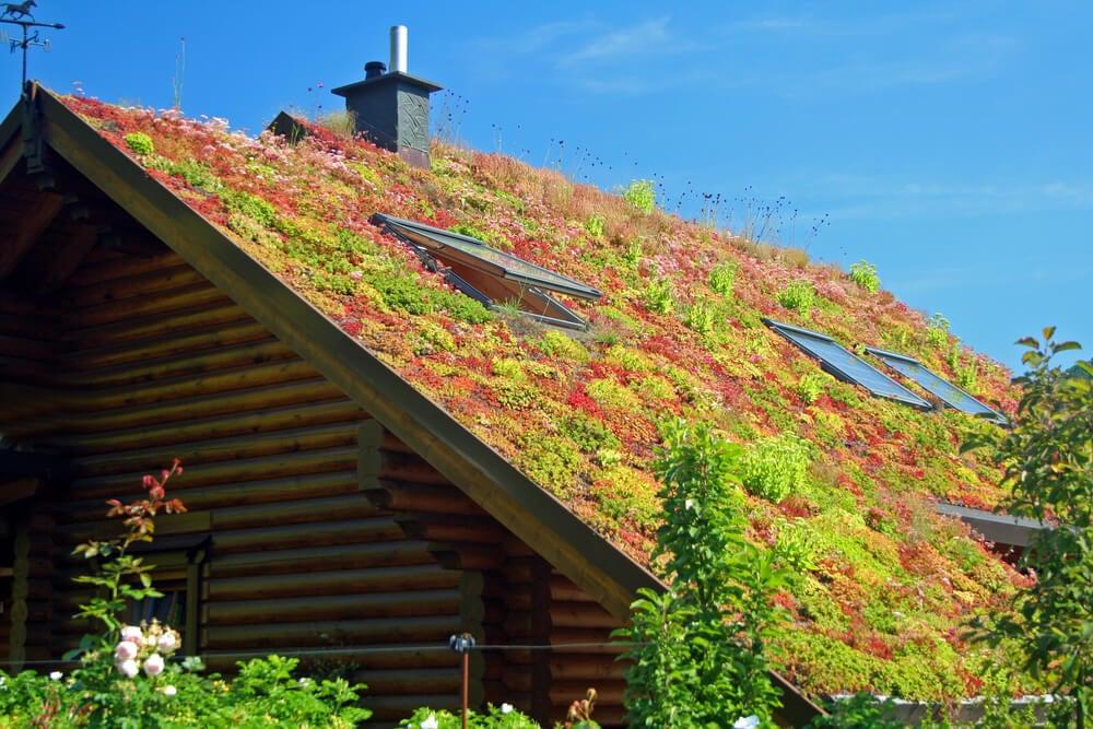 Tipos de telhado verde