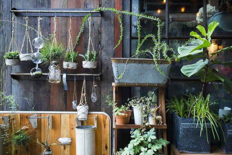 plantar no terraço