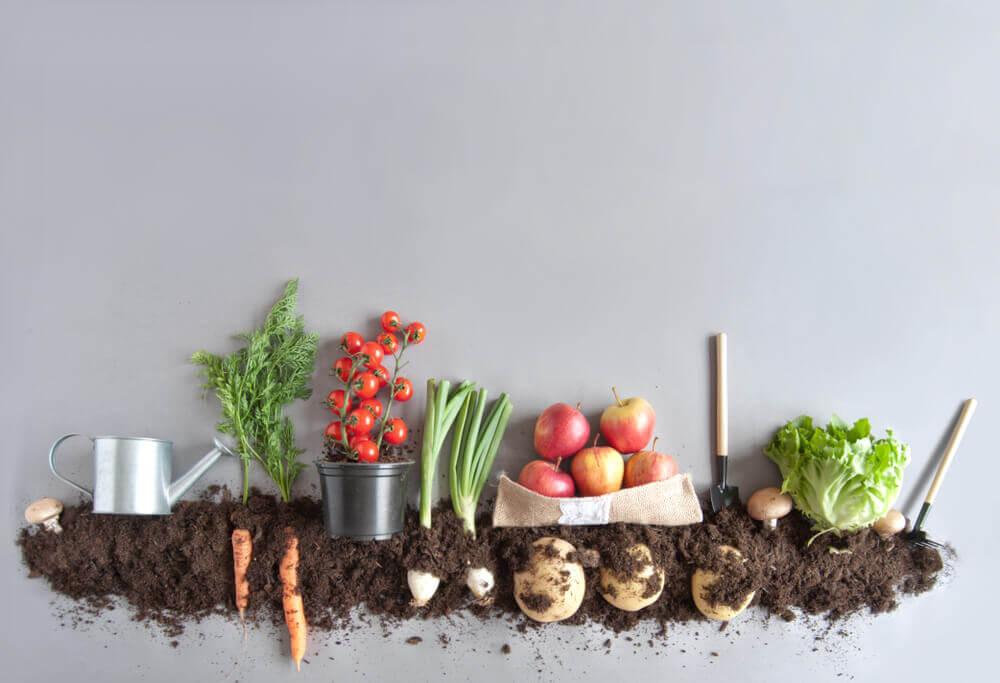 6 truques para começar a plantar no terraço