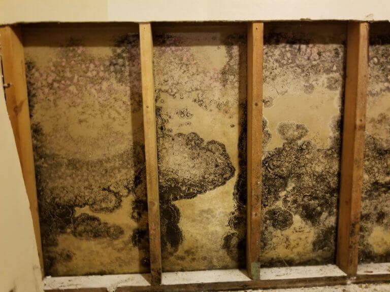 manchas de mofo da madeira