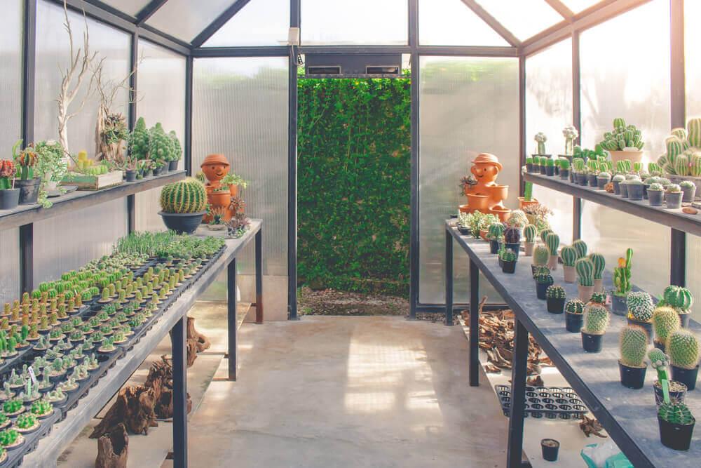 A estufa: um lugar ideal para as suas plantas