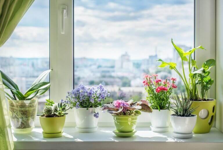 Combinações de flores e plantas
