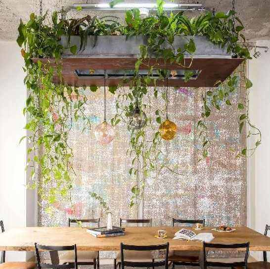 Ideias para decorar com plantas suspensas