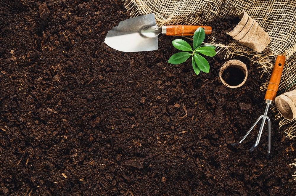 Como fazer uma horta no jardim?