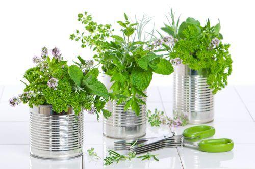 teneke kutulardan çiçek vazoları