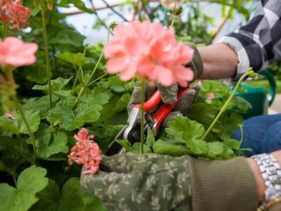 Bahçenizi Budamadan Önce Aklınızda Bulundurmanız Gerekenler
