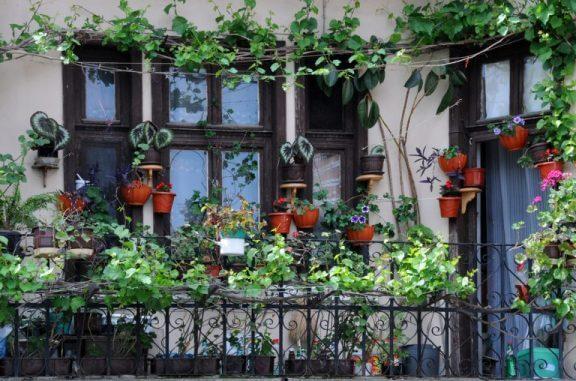 balkon çiçek saksıları