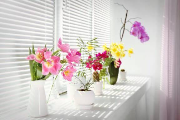 cam kenarında çiçekler