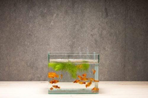 kare modern balık fanusu tasarımı