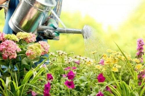 bahçede çiçek sulama
