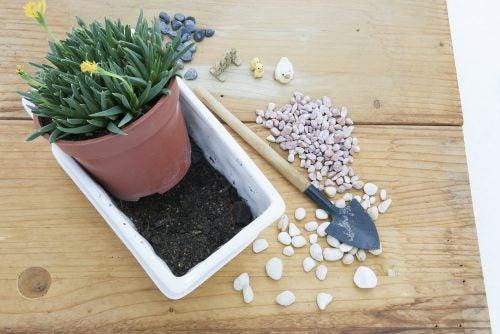Saksı tasarımında dekoratif taşları toprağı kaplayacak şekilde düzenleyebilirsiniz.