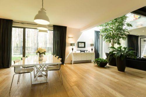 geniş oda içinde büyük bitkiler ve iç mekan bitkileri