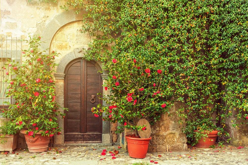 kırmızı çiçekli tırmanıcı bitki
