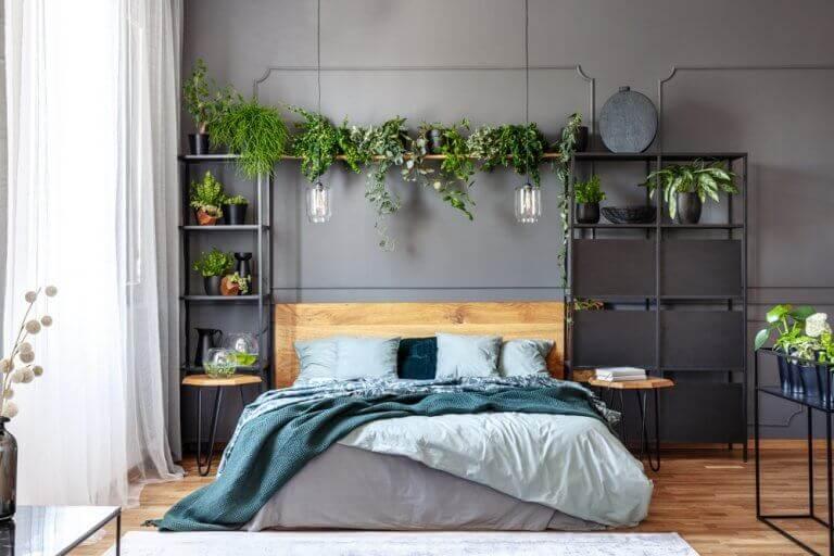 Gri duvarlı odada raf başlıklı bitkilerle dekore edilmiş yatak