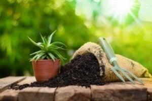 Bitkilerin çoğaltılması