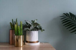 Metal vazolar