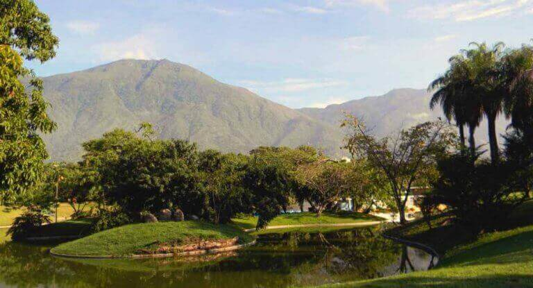 Venezueladaki parkın ağaçlık kısmından bir manzara