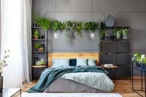 Bitkiler ile yatak odası düzeni