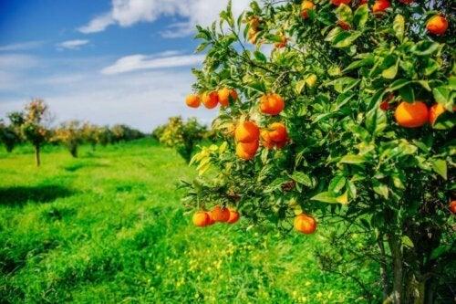 Kendi Meyve Ağaçlarınızı Yetiştirmek
