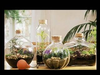 şişe bahçeler
