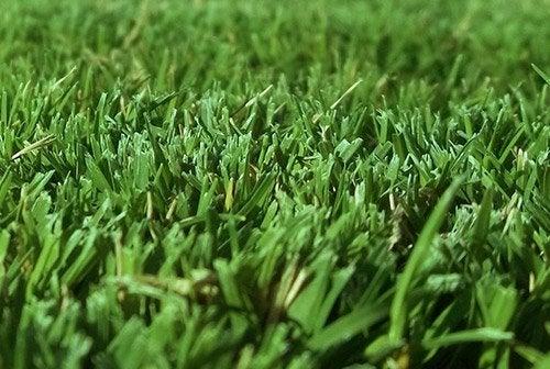 Yeni ekilmiş doğal çim