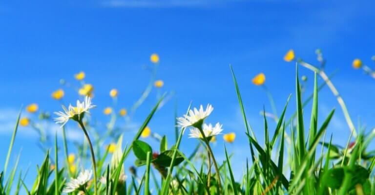 Yabani Otlar - Bahçenizi Nasıl Kurtarabilirsiniz?