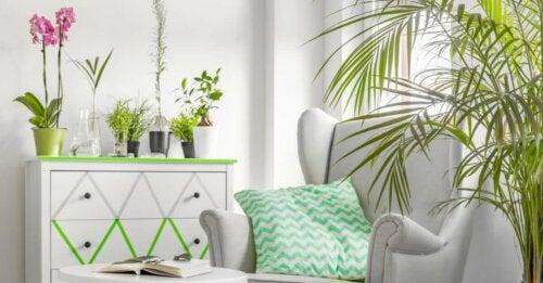 beyaz ve yeşil mobilyalar var çeşitli boylarda bitkiler