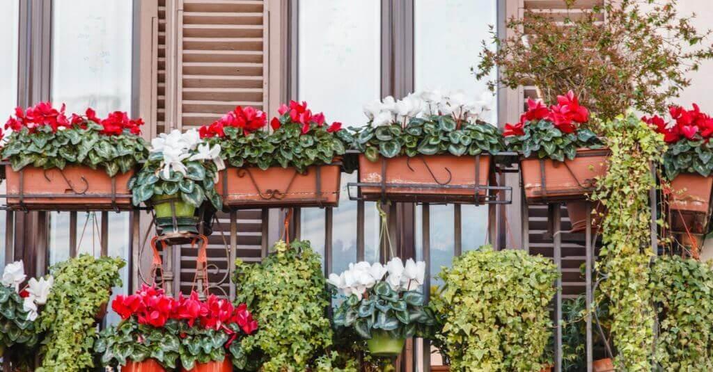 Kırmızı ve beyaz çiçeklerle bezeli balkon