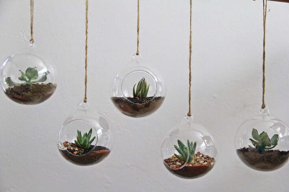 Tavandan sarkıtla asılı kürelerde aloe vera benzeri yeşil minik bitkiler