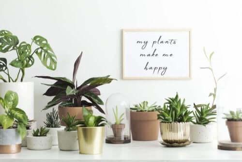 Duvarda çerçeve önünde farklı türde minik bitkiler