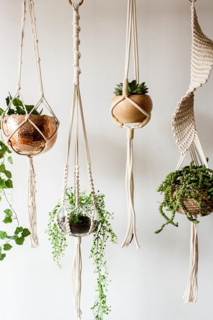 askılı saksı bitkileri