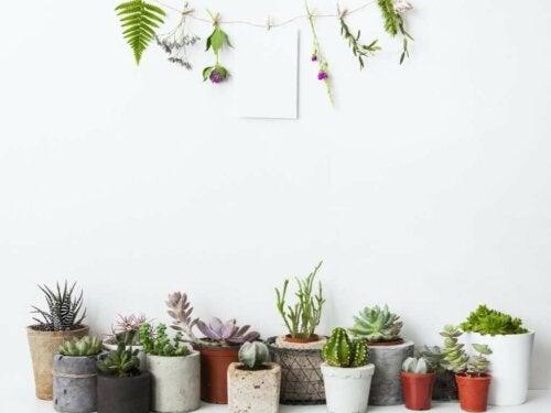 Bitkiler İle Dekorasyon İçin 5 İnanılmaz Fikir