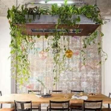 Askılı Saksı Bitkileriyle Süsleme Fikirleri