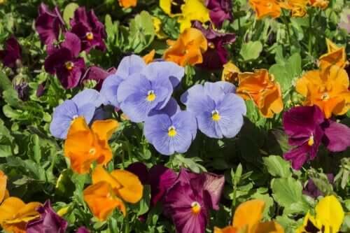 yaz bahçesi renkleri